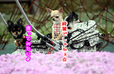 04_20090513011604.jpg