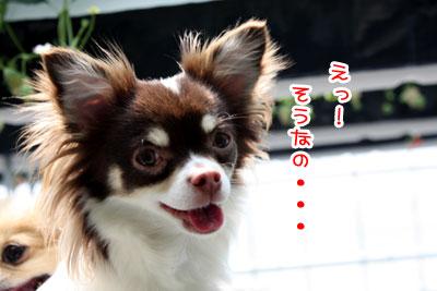 04_20090525201331.jpg