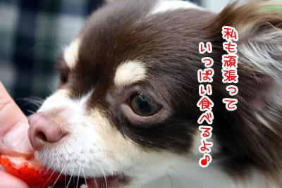 04_20090527022713.jpg