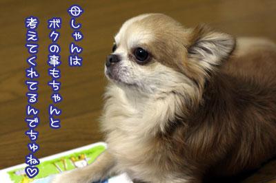 04_20090712105247.jpg