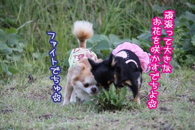 04_20091030110210.jpg