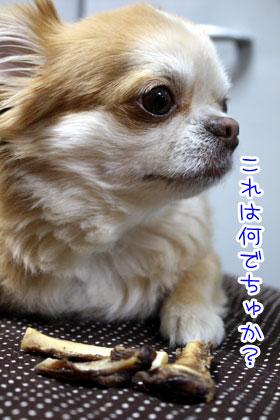 05_20090318164545.jpg