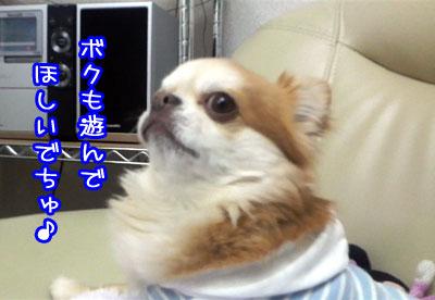 05_20090413234127.jpg