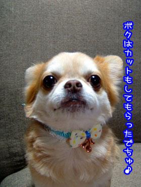05_20090521022453.jpg