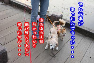 05_20090629010235.jpg