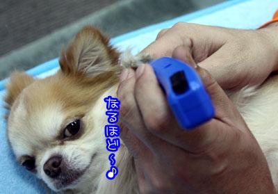 06_20090303101533.jpg