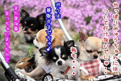 06_20090513011623.jpg