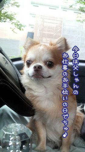 06_20090802141437.jpg