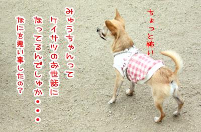 07_20090511170810.jpg
