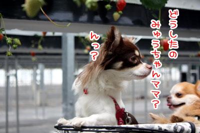 07_20090525201714.jpg