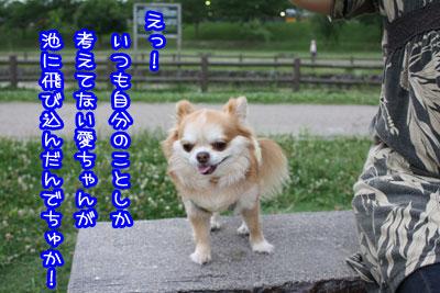07_20090629010304.jpg