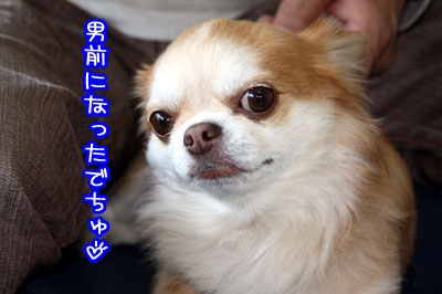 08_20090415131055.jpg