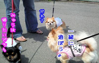 08_20090503015641.jpg