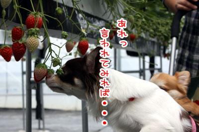08_20090525201722.jpg