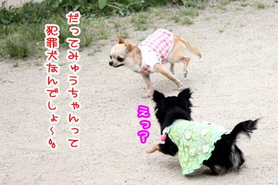 09_20090511171038.jpg