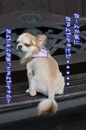09_20090806104712.jpg