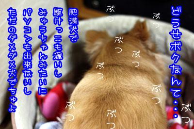 101_20090225163424.jpg