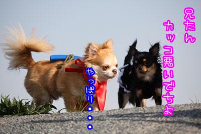 104_20090408002945.jpg