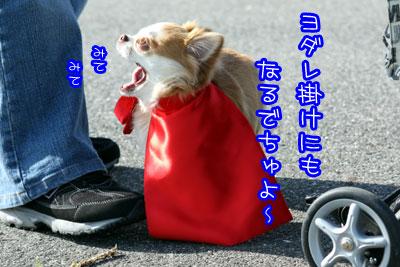 109_20090408002922.jpg