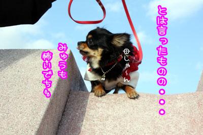 10_20090425215933.jpg