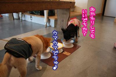 10_20090807122552.jpg