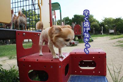 10_20090809213637.jpg