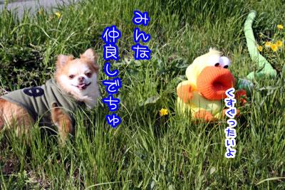 113_20090408002820.jpg