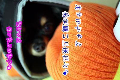 114_20090329011845.jpg