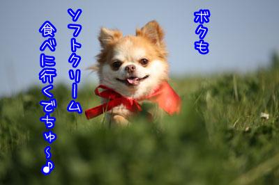 114_20090405231719.jpg