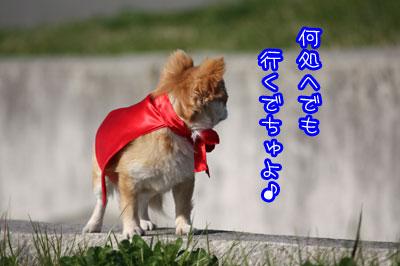 115_20090406011019.jpg