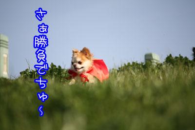 117_20090403165925.jpg