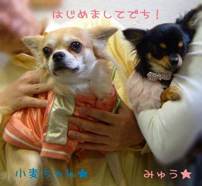 11_20081224031754.jpg