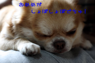 11_20090119034315.jpg