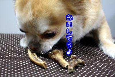 11_20090318164559.jpg