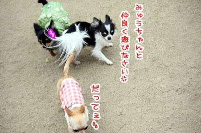 11_20090511171049.jpg