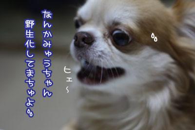 11_20090712105701.jpg