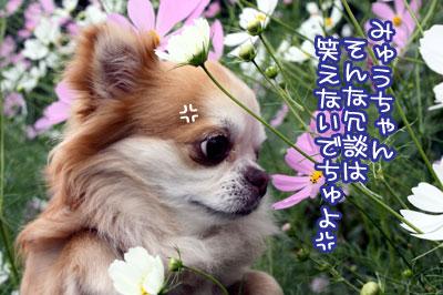 11_20091007161747.jpg