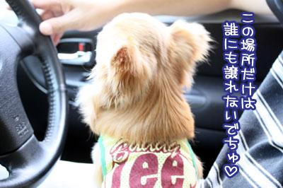11_20091030110139.jpg