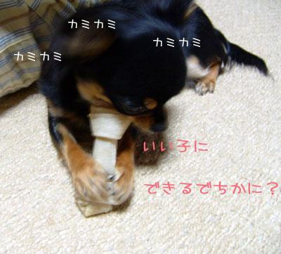 12_20081228031615.jpg