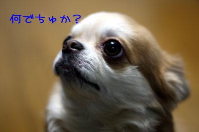 12_20090121035248.jpg