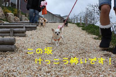 12_20090205014632.jpg