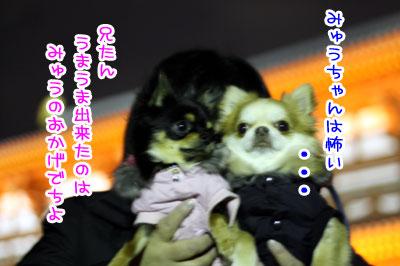 12_20090209021606.jpg