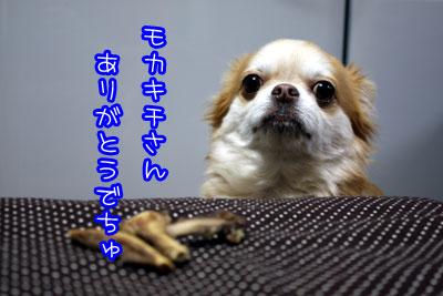 12_20090318164607.jpg
