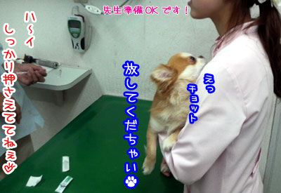 12_20090426224745.jpg