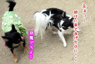 12_20090511171055.jpg