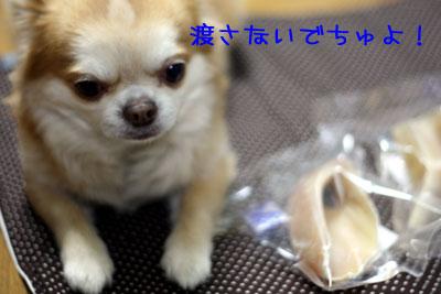 13_20090121035256.jpg