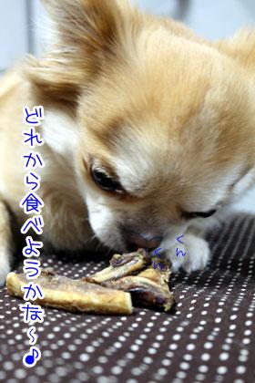 13_20090318164615.jpg