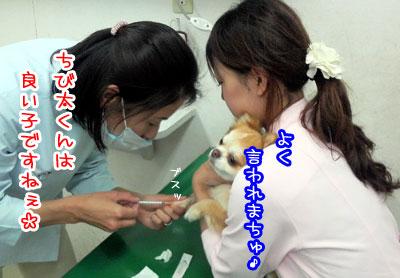 13_20090426225145.jpg