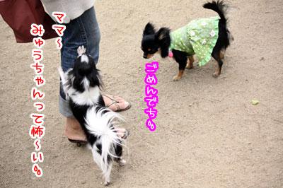 13_20090511171101.jpg