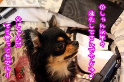 13_20090515210737.jpg